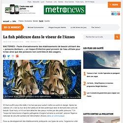 METRO 25/04/13 La fish pédicure dans le viseur de l'Anses