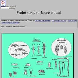 Pédofaune ou faune du sol