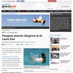 Penguin attacks Gingrich at St. Louis Zoo