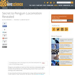 Secret to Penguin Locomotion Revealed