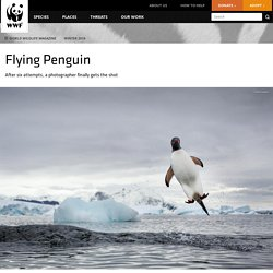 """Flying Penguin"" by Paul Souders"