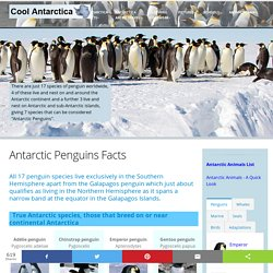 Types of Penguins, species, facts and adaptations