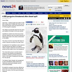 4 000 penguins threatened after diesel spill
