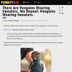 There Are Penguins Wearing Sweaters. We Repeat: Penguins Wearing Sweaters. ...