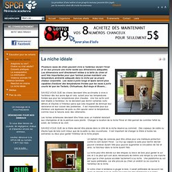 SPCA Péninsule acadienne - La niche idéale