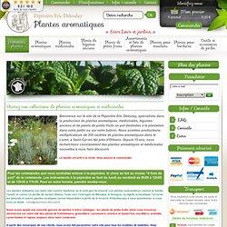 cs, menthes, sauges,thyms et légumes anciens <<< Pépinières Deloulay >>> Plantes Aromatiques et plaisir du jardin <<< Pépinières Deloulay >>> Achetez vos plants aromatiques, basili
