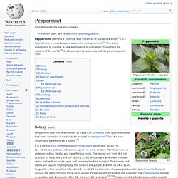 WIKIPEDIA – Peppermint.
