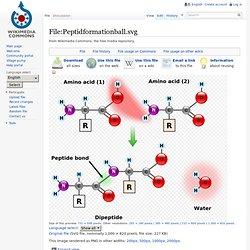 File:Peptidformationball.svg
