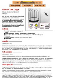 Bird in the Cage: Color, Light & Perception Science Project