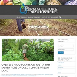 Perennial Abundance – over 200 Food Plants on Just a Tiny 1/10th Acre of Cold Climate Urban Land