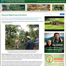 Perennial Staple Crops of the World Permaculture Research Institute