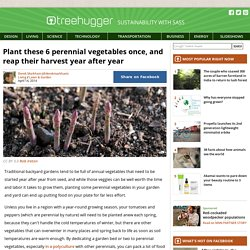 6 Perennial Vegetables Produce Year After Year
