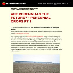 Are Perennials the Future? - Perennial Crops Pt 1 — The Food Resilience Project