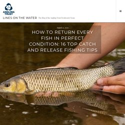 How to return every fish in perfect condition: 16 top catch and release fishing tips – Lines on the Water