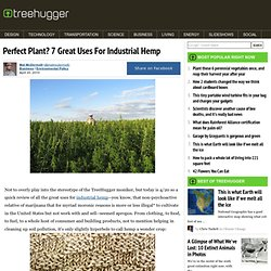 7 Great Uses For Industrial Hemp