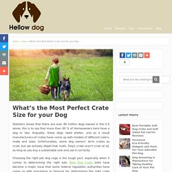 Perfect Dog Crate Size Selection Procedure