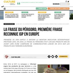 CAMPAGNES ET ENVIRONNEMENT 19/04/18 La fraise du Périgord, première fraise reconnue IGP en Europe