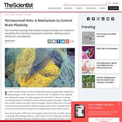 Perineuronal Nets: A Mechanism to Control Brain Plasticity