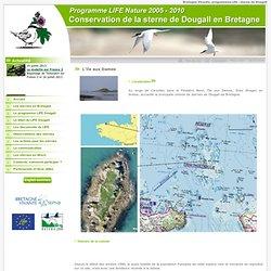 Sternes de Dougall de Bretagne - Baie de Morlaix