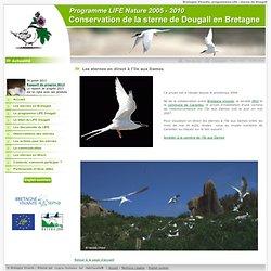 Webcam sur l iles aux Dames dans la baie de Morlaix - Reserve d&