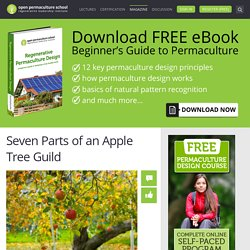 Seven Parts of an Apple Tree Guild - Open Permaculture - Permaculture Design Course