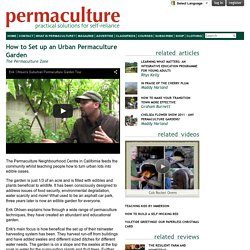 How to Set up an Urban Permaculture Garden