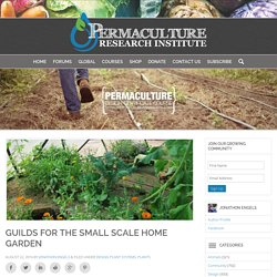 Guilds for the Small Scale Home Garden - The Permaculture Research Institute