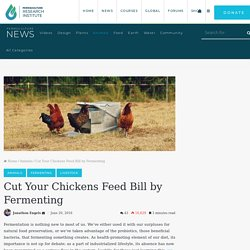 Cut Your Chickens Feed Bill by Fermenting