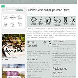 Cultiver l'épinard en permaculture au potager