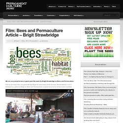 Bees and Permaculture Article and Film- Brigit Strawbridge