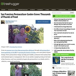 San Francisco Permaculture Garden Grows Thousands of Pounds of Food
