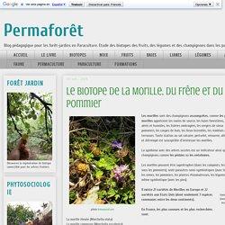 Permaforêt: Le biotope de la Morille, du Frêne et du Pommier