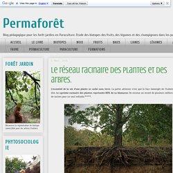 Permaforêt: Le réseau racinaire des plantes et des arbres.