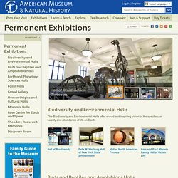 AMNH, NY: Permanent Exhibitions