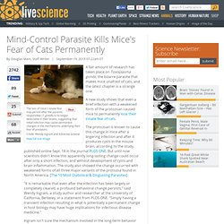 Mind-Control Parasite Kills Mice's Fear of Cats Permanently