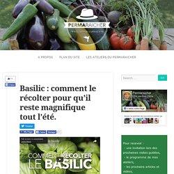 Basilic : comment le récolter pour qu'il reste magnifique tout l'été.