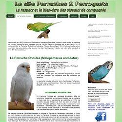 La Perruche Ondulée - Perruches et perroquets