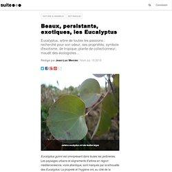 Beaux, persistants, exotiques, les Eucalyptus: A chaque situation son gommier, arbre insolite ou arbuste esthétique
