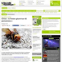 Chine : le frelon géant tue 42 personnes - 04/10/2013