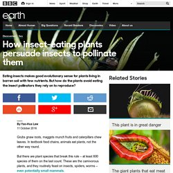 Earth - How insect-eating plants persuade insects to pollinate them