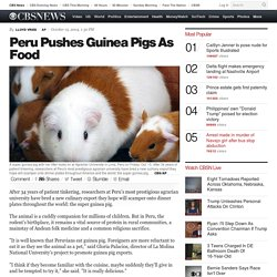 Peru Pushes Guinea Pigs As Food