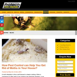 How Pest Control can Help You Get Rid of Moths in Your House?