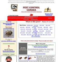 Pest Photos 1 to 100