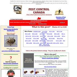 Pest Photos 1 to 100