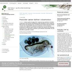 Pesticider sætter dafnier i slowmotion – Københavns Universitet