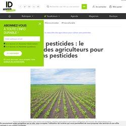 Zones sans pesticides : le casse-tête des agriculteurs pour cultiver sans pesticides