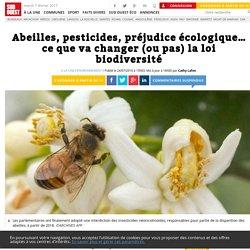 Abeilles, pesticides, préjudice écologique… ce que va changer (ou pas) la loi biodiversité - Sud Ouest.fr