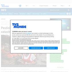 """Pesticides en Afrique : """"une catastrophe sanitaire au ralenti"""""""