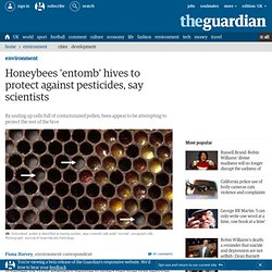 Honeybees 'entomb' hives to protect against pesticides, say scientists | Environment