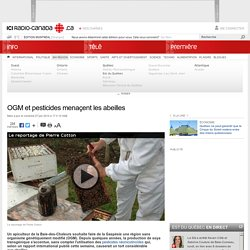 RADIO CANADA 27/06/14 OGM et pesticides menaçent les abeilles